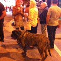 I seem to run into behemoth dinosaur size dogs in this city