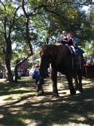 : Elephant ride.