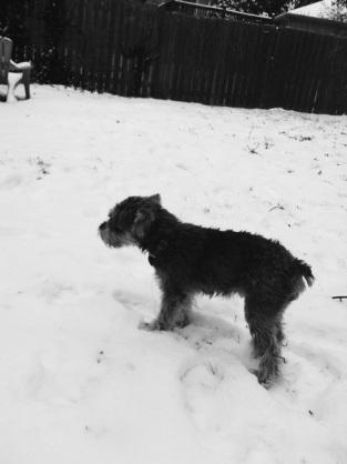 JAX hates the snow.